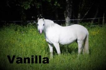 Vanilla med namn